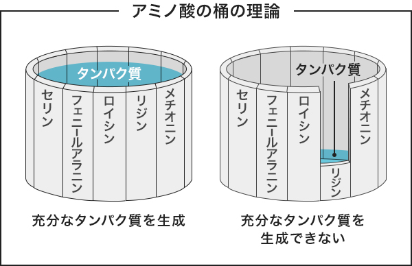 アミノ酸の桶の理論